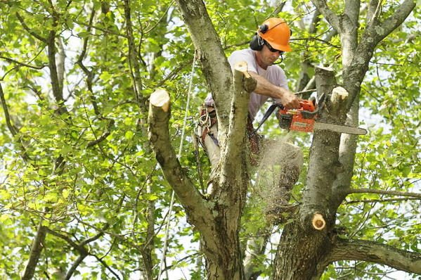 sioux-city-tree-trimming3.jpg